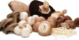 Mushrooms-Shiitake